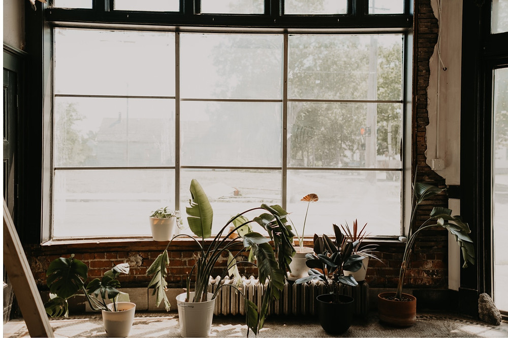 Windowsill with plants and bright sunlight coming in. Photographed by Nicole Leanne Photography