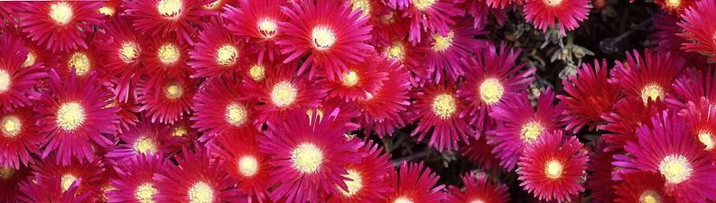 Flowers Pan.jpg