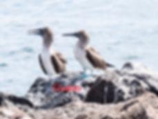 Galapagos-dj-2016-1Guano.jpg