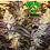 Thumbnail: SLYMER X WILSON