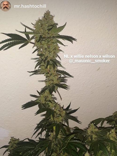 Northern lights 5 x willie Nelson x wilson