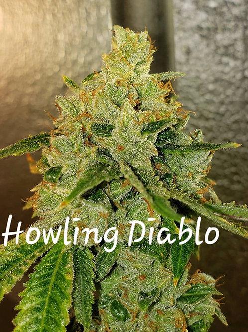 Howling Diablo -Hybrid