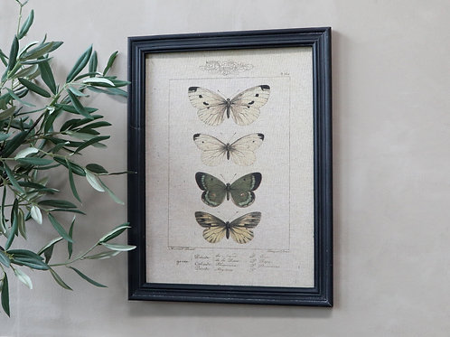 Butterfly picture canvas in black frame