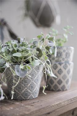 pretty kitchen plants