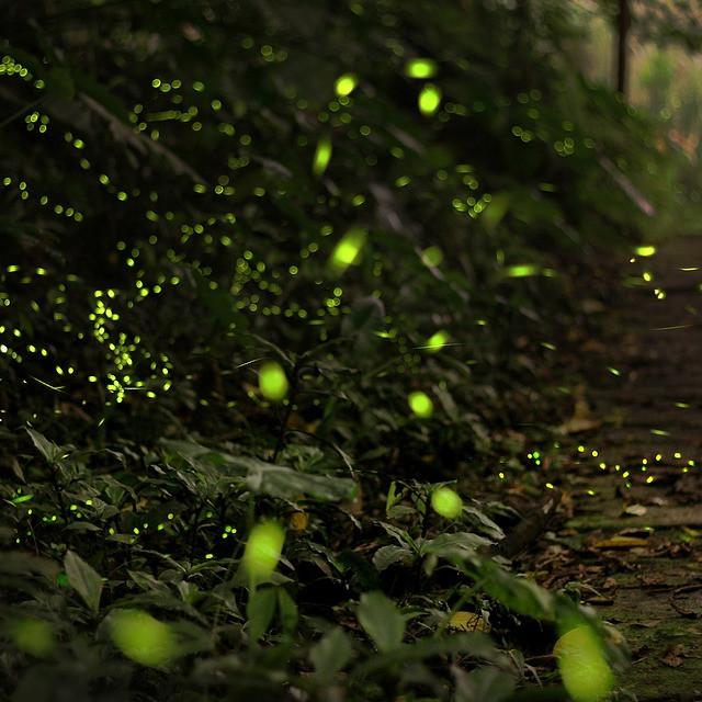 Biolumineszenzen kann leider wetterbedingt nicht stattfinden