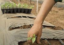 Planting%20Plants_edited.jpg