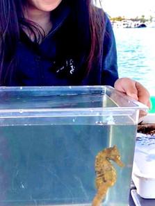seahorse and intern.jpg