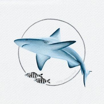 Shark and pilot fish