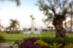 Photo from the hotel Amathus in Limassol with its beautiful gardens, ready for wedding ceremony.