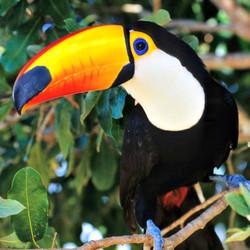 Pantanal-Wildlife.jpg