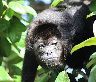 monkey-796824_640.jpg