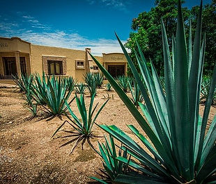 tequila town.jpg