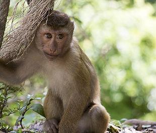 monkey-2038859_640.jpg