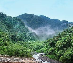 jungle-4003374_640.jpg