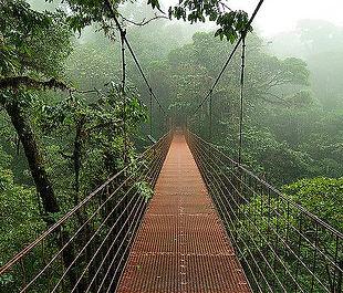 hanging bridge monteverde.jpg