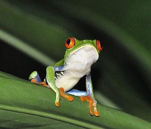 frog-1434425_640.jpg