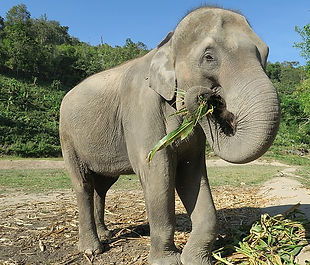 elephant-1500095_640.jpg