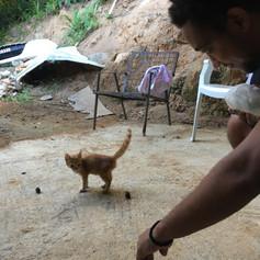 bamboozoo and kitten