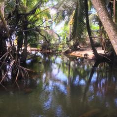 Wetlands to Beach