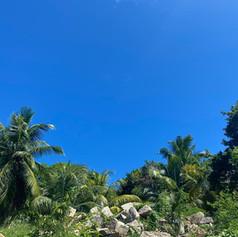 rocks, trees, sky