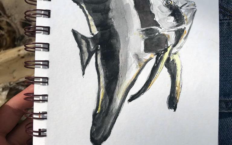 Longfin Batfish for Helen