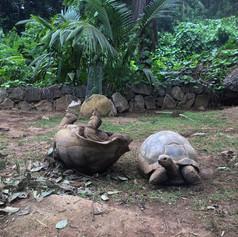 Tortoise Flip