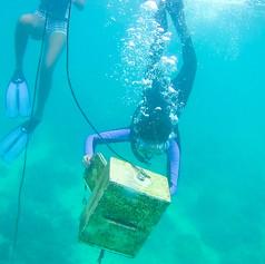 Checking the Underwater Mailbox