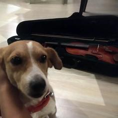 titi and violin