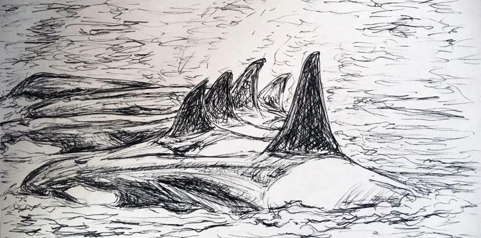 Orcas for Maria