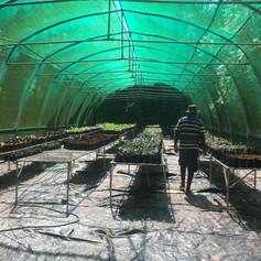 Praslin greenhouse