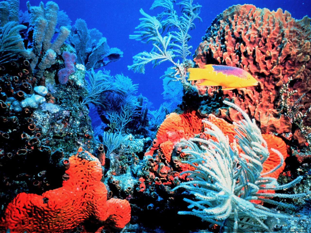 Keys reefs