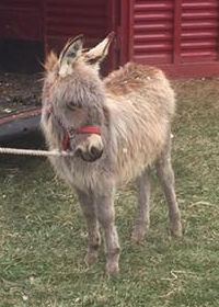 guard donkey