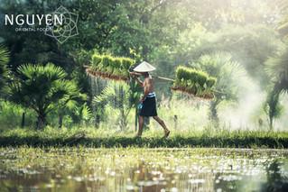 Rijst | New Crop rice