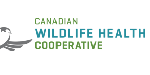 The Canadian Wildlife Health Cooperative National Bat Health Report - 2021
