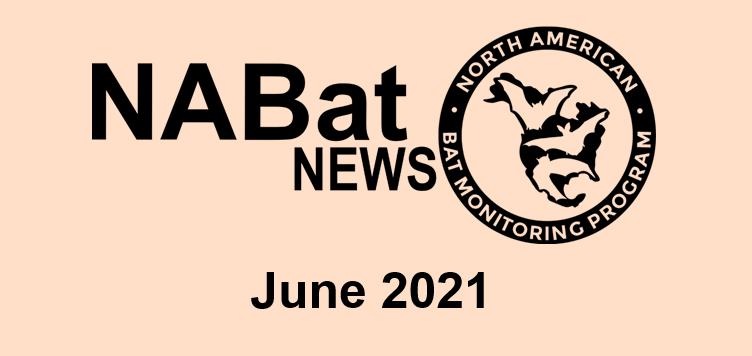NABat News June 2021