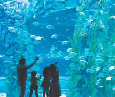 Lotte Aquarium