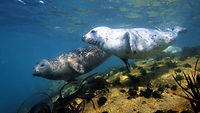 snorkelling with seals st martins