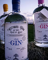 Westward Farm Gin St Agnes Isles of Scilly Cornwall