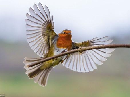 A Bird in the Atrium