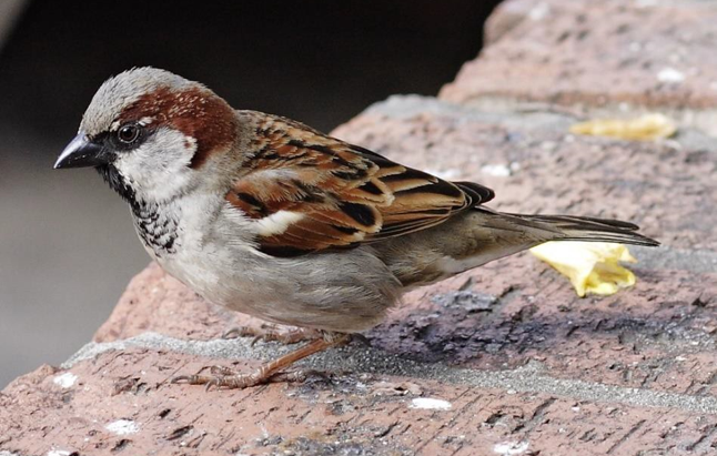 The decline and fall of urban birds
