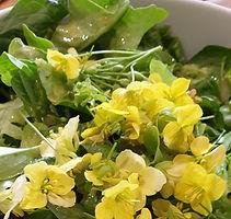 Freshly picked salad