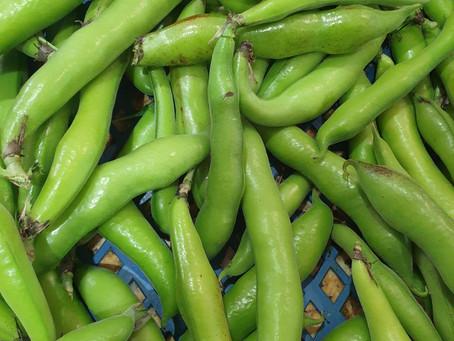 Bean Mash - Cooking the humble Broad Bean