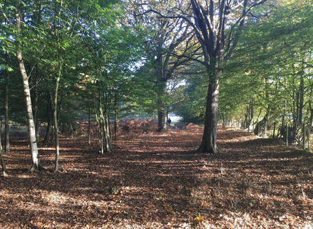 Why is ancient woodland important?