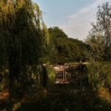 A relaxing swim at Green Farm