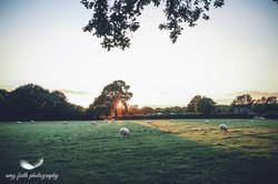 Green Farm Fields