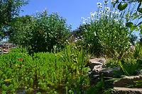 Wildlife Community Garden