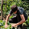 Harvest at Green Farm garden