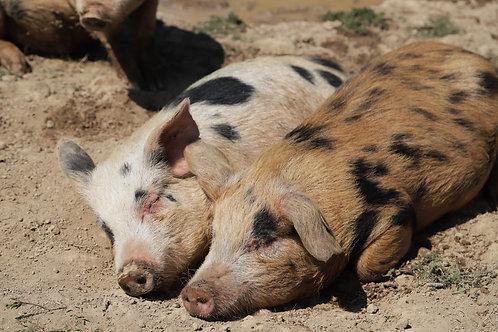 Outdoor Reared Pork Box