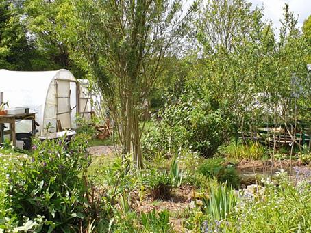 Developing our kitchen garden