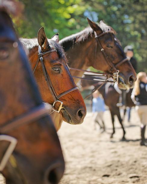 LWSC-Bridle-Trails-Classic-Horse-Show-Eq